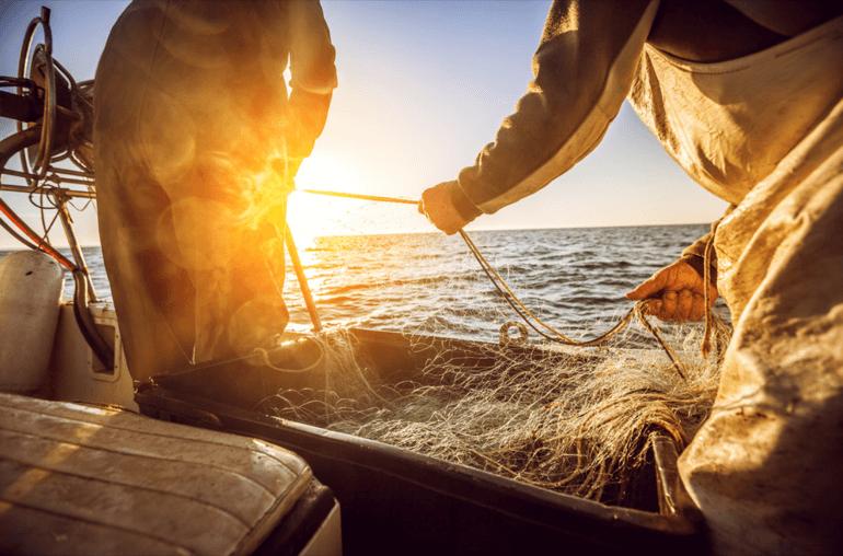 pescando concorrentes